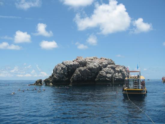 Easy Divers Bophut-Choeng Mon: стайка дайверов