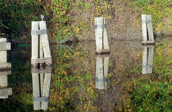 "Suffolk, VA: Oct 24 2010 Dismal Swap ""Pillar Reflections"""