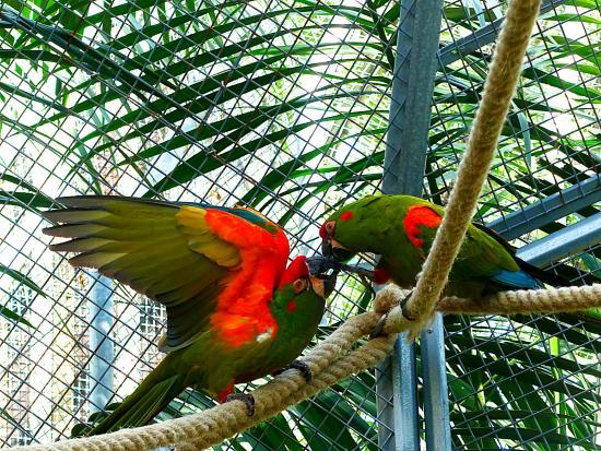 Zoo Barcelona zoo barcelona picture of barcelona zoo barcelona tripadvisor