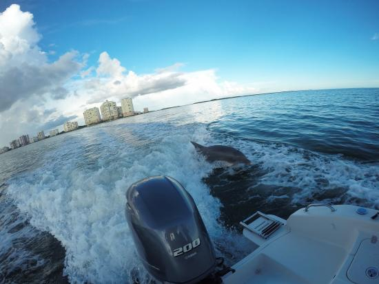 Florida Adventures and Rentals: Dolphins playing off the coast