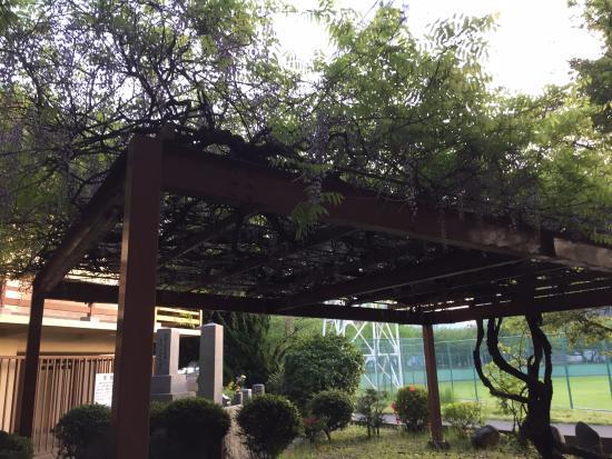 Sanno Park