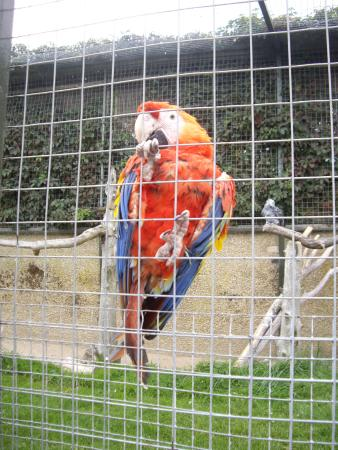 Seaview, UK: parrot