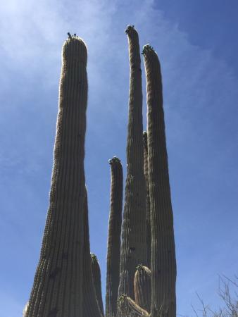 King Canyon Trail: photo3.jpg