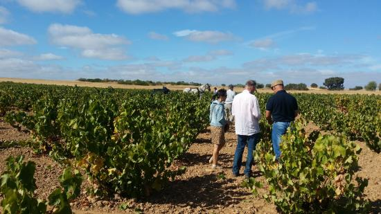 Almendralejo, Spain: Wine Tour Extremadura