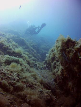 SubLimits Diving Center : Inmersión en Les Planetes