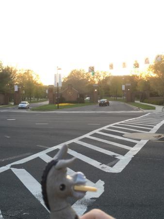 Колледж-Парк, Мэриленд: photo1.jpg