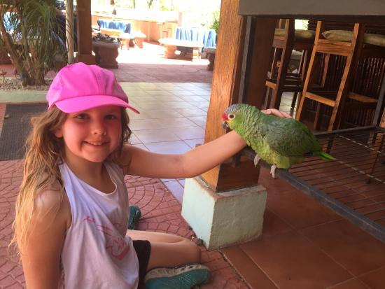 Hotel Bula Bula: Friendly parrot!