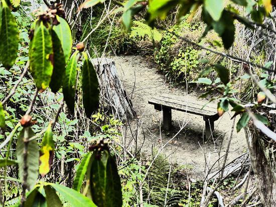 Albion, CA: Mendocino Coast Botanical Gardens