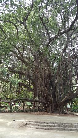 Algeri, Algeria: Le Jardin d'Essai du Hamma