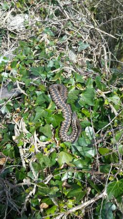 Parkdean - Challaborough Bay Holiday Park: 20160420_104529_large.jpg