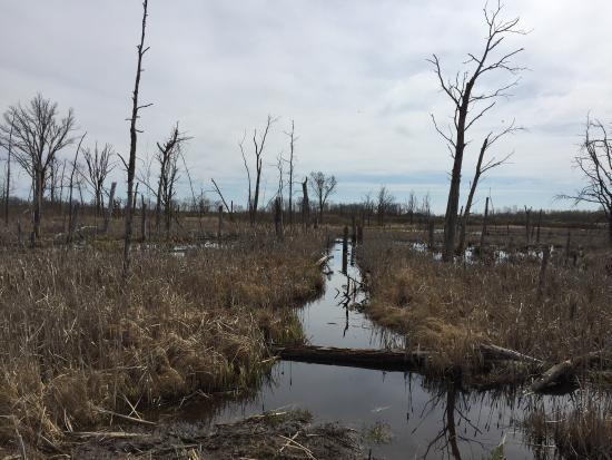 McGregor, MN: Rice Lake National Refuge
