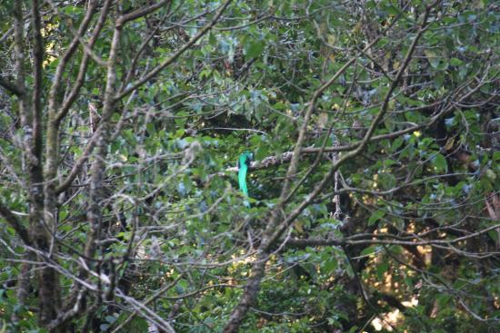 San Gerardo de Dota, Κόστα Ρίκα: Vogelbeobachtung Göttervogel Quezal