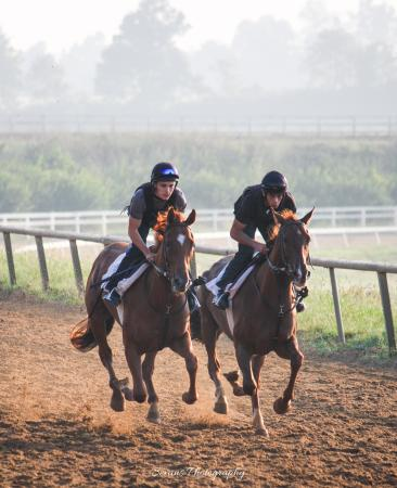 The Thoroughbred Center : Champions in Training