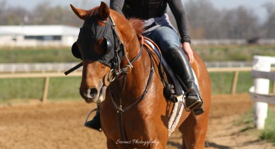 The Thoroughbred Center : See what it takes to become a racehorse.