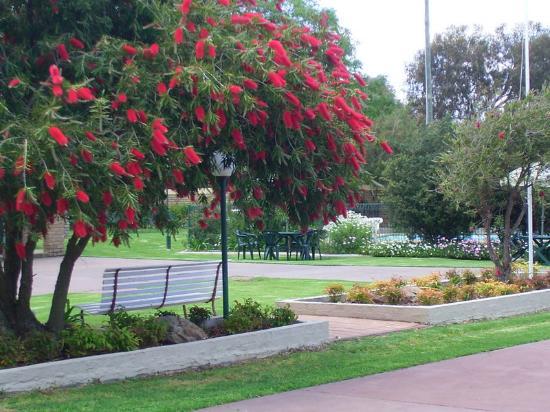 Mulwala, ออสเตรเลีย: Garden area
