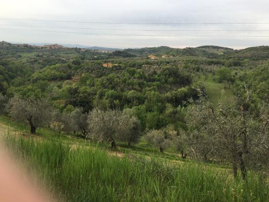 Locanda di CasalMustia: photo6.jpg