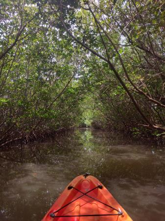 West Lake : In the mangrove tunnels