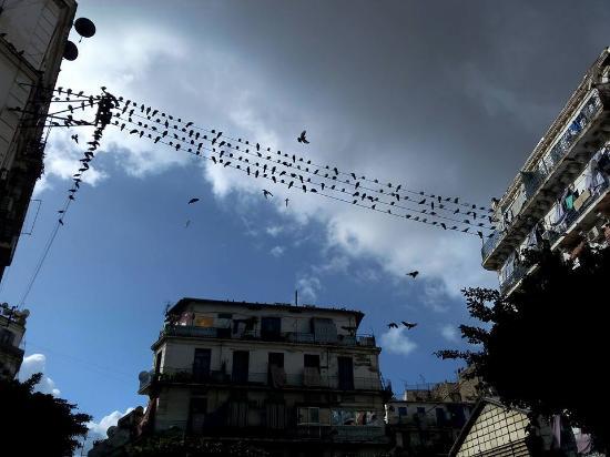 Αλγέρι, Αλγερία: terrasses