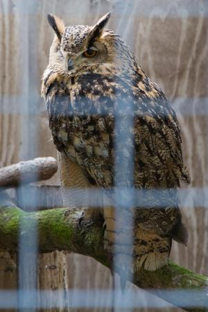Wroxall, UK: Isle of Wight Owl and Falconry Centre