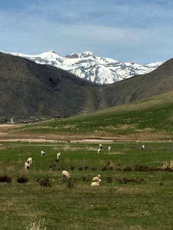 National Elk Refuge : photo0.jpg