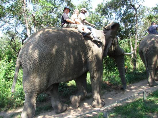 Hazyview, Sydafrika: Riding an elephant