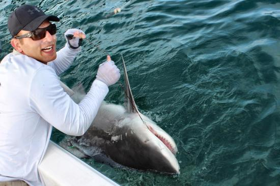 Boca Grande, فلوريدا: Tag & release bull shark