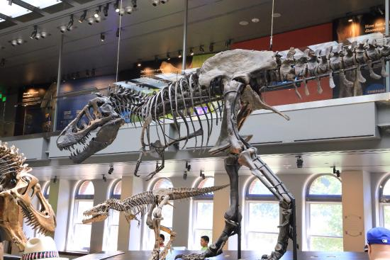 photo1 jpg picture of natural history museum of los angeles county rh tripadvisor com