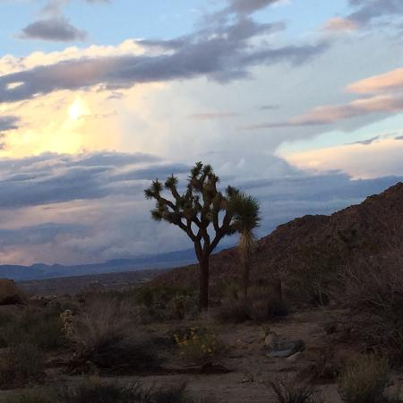 Joshua Tree, CA: From the road on the way to the Desert Lily