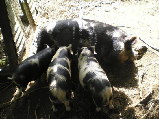 Whitianga, نيوزيلندا: Mum and kids