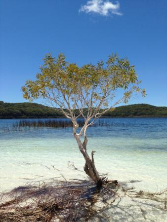 Fraser Coast, Australia: Lake Birrabeen