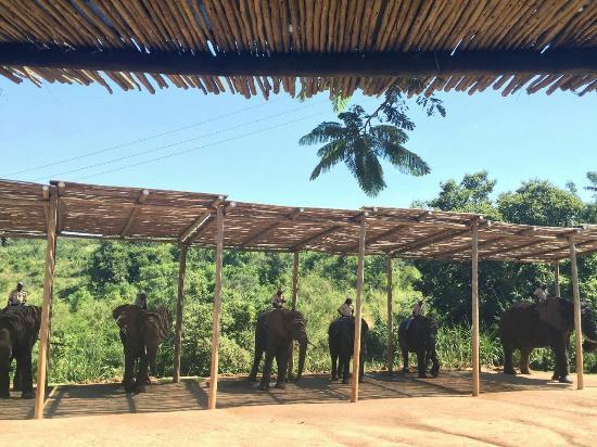 Hazyview, Sydafrika: Beautiful, gentle giants