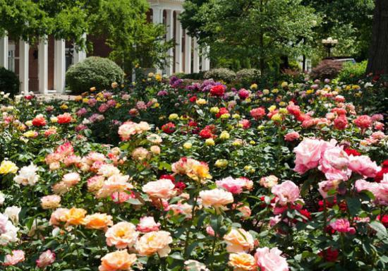 Wrigley Gardens