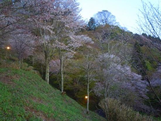 Nara (idari bölge), Japonya: 上千本桜