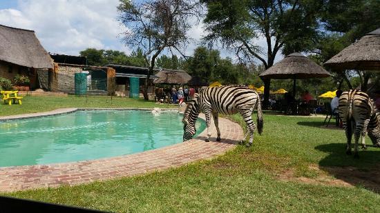 Review of Heia Safari Ranch, Muldersdrift, South Africa