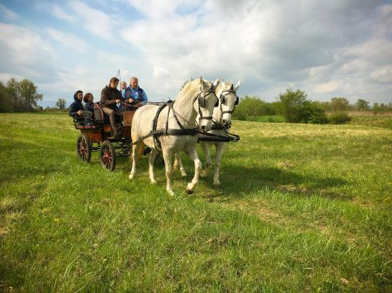 Catez ob Savi, Slovenien: Carriage ride trough nature