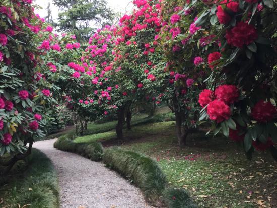 Bosco di rododendri - Foto di Villa Carlotta, Tremezzina - TripAdvisor