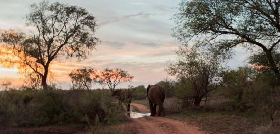 Timbavati Private Nature Reserve ภาพ