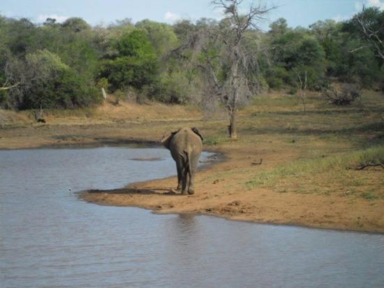 Gravelotte, Sudáfrica: Elephant at dam