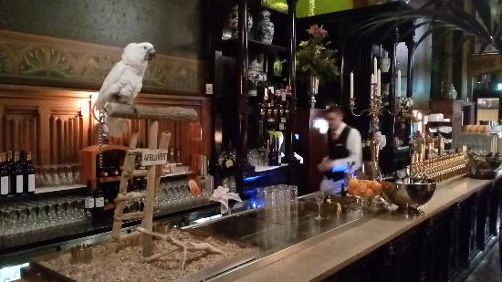 Grand Cafe-Restaurant: live parrot on the bar