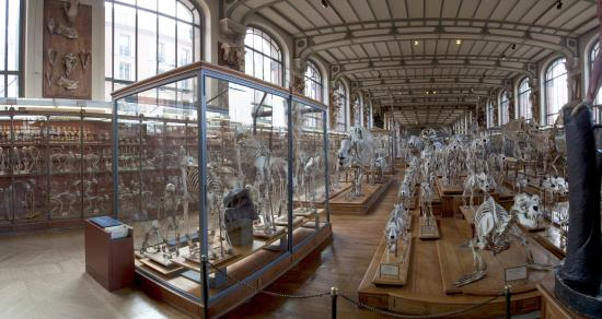 Galeries d'Anatomie Comparée et de Paléontologie