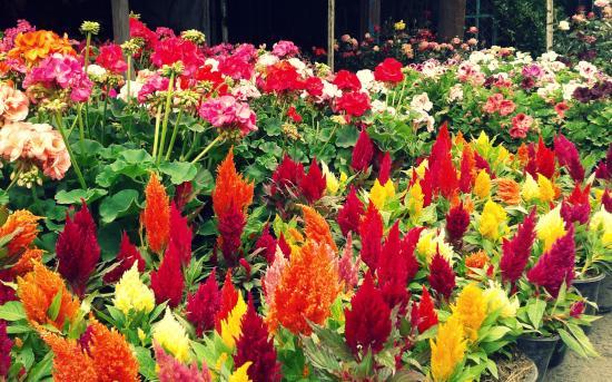Mercado de las Flores de Nativitas