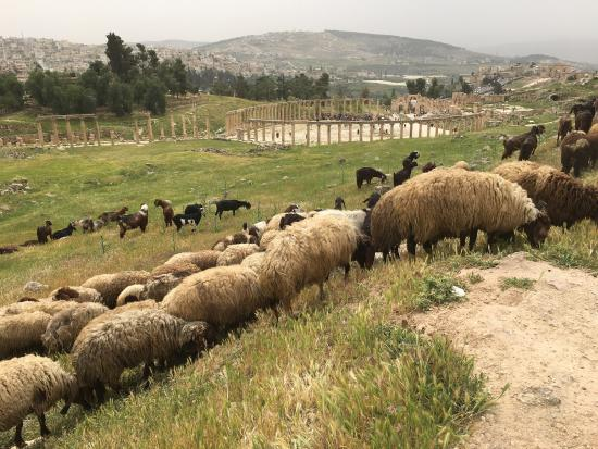 Jerash-ruinene: photo0.jpg