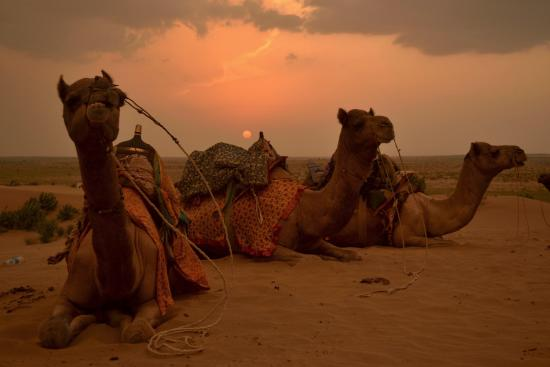 jeep safari at sam sand dunes picture of prince desert camp rh tripadvisor com
