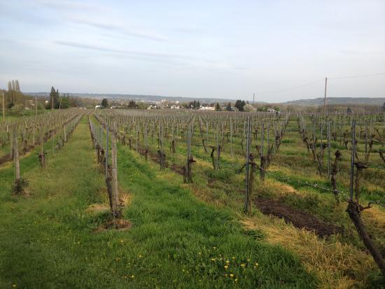 Oestrich-Winkel, Alemania: hier wächst einen tollen Wein