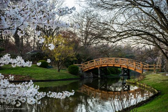 The Japanese Garden Circles A Lake With Many Hidden Surprises Along The Way Picture Of