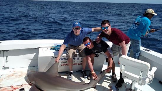 Норт-Майами-Бич, Флорида: 6 foot bull shark