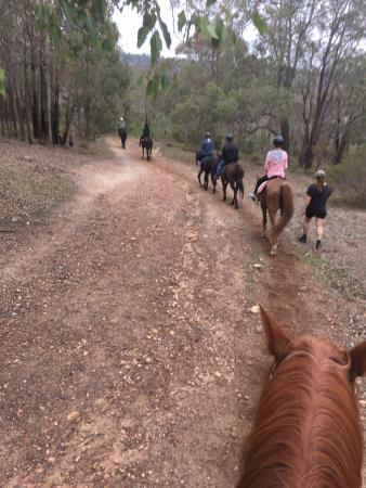 Darlington, Australia: Trail ride, after I swapped onto Nathan from Kevin for my nervous friend.