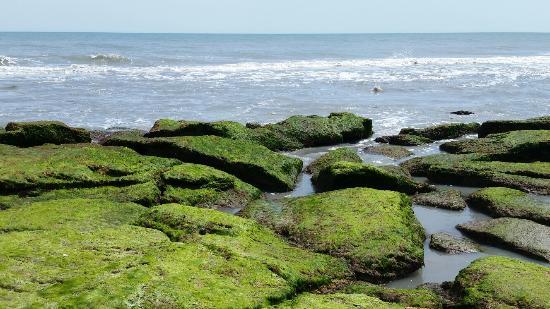 Kure Beach, Carolina del Norte: Coquina Outcrop