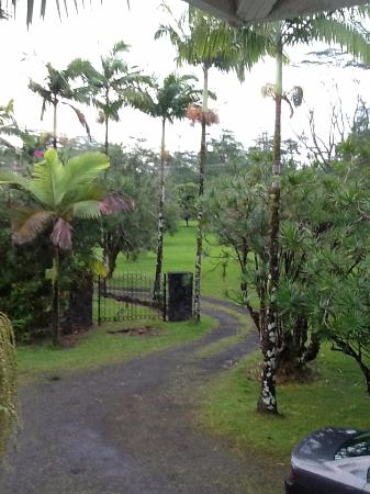 Lava Tree Tropic Inn: Beautiful yard!