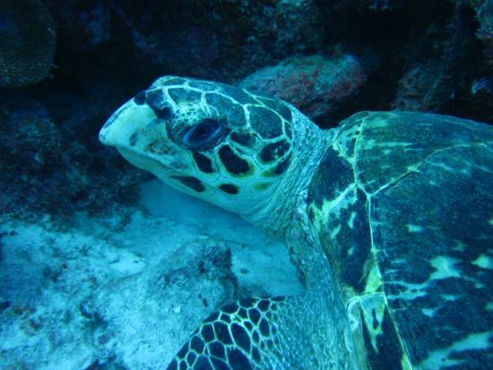 Want 2 Dive: turtle